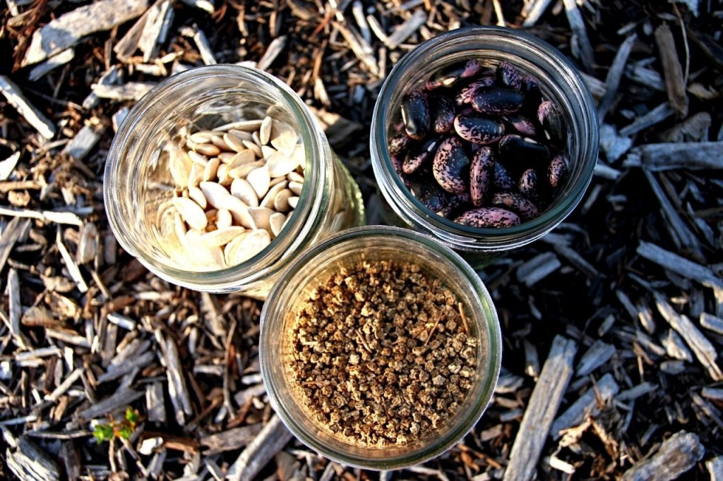 Awesome Food: UCSC Seed Library
