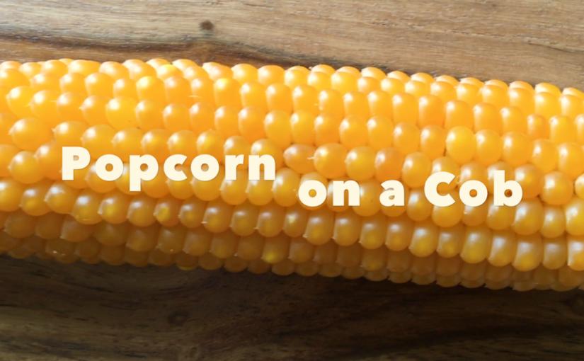 popcorn on a cob